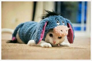 chaton-deguisement-bourriquet