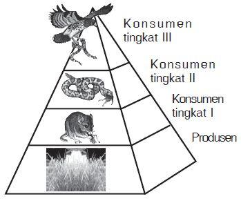 Pengertian serta Contoh Rantai Makanan dan Jaring-jaring Makanan beserta Gambarnya
