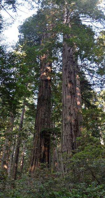 couple more big trees
