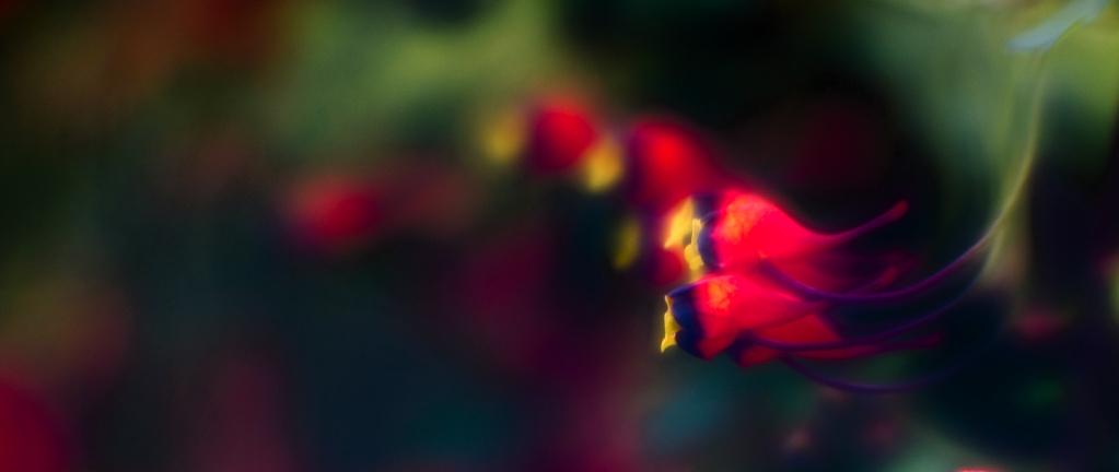 Aus dem Fotoarchiv (21) – Kleines Blümchen freigestellt