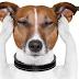 Técnica ensina a proteger cães do barulho dos fogos de artifício