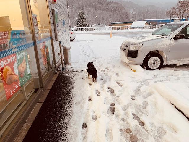 狗狗在雪地中