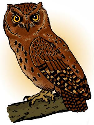 Informasi wacana burung hantu celepuk siau Mengenal Celepuk Siau