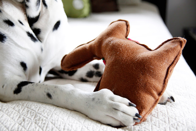 Dalmatian dog with paw on a homemade stuffed Easter bunny toy