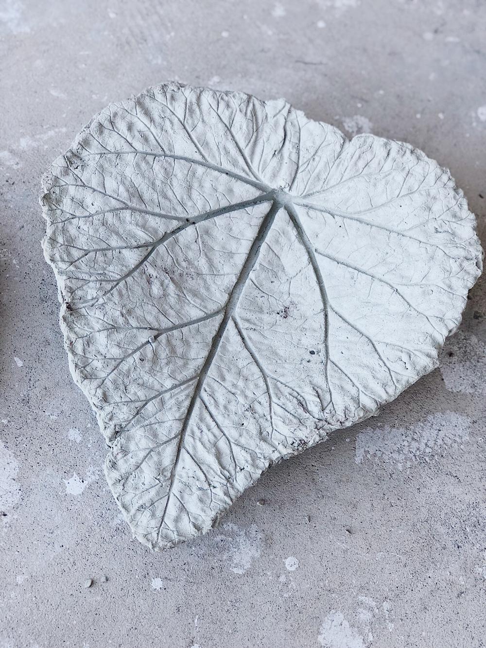 Diy Beton Pflanzschalen Aus Rhabarberblättern Für Den