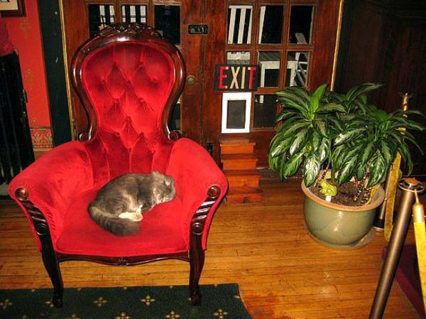 crescent hotel cats