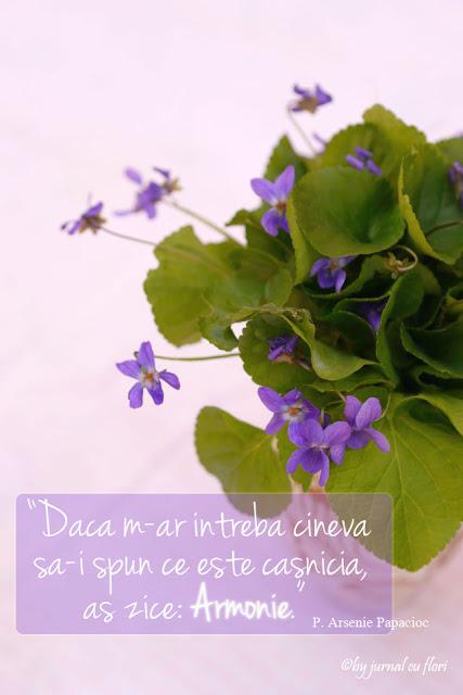 citat despre casnicie a parintelui Arsenie Papacioc buchet de flori mov de primavara