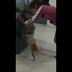 perro ayuda a su dueña a empujar su casita