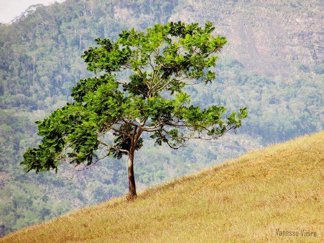 photovanes, paisagem, folhas,  8on8, natureza, galhos, árvores, céu, vida, vanessa vieira, fotografia, vanessa vieira fotografia