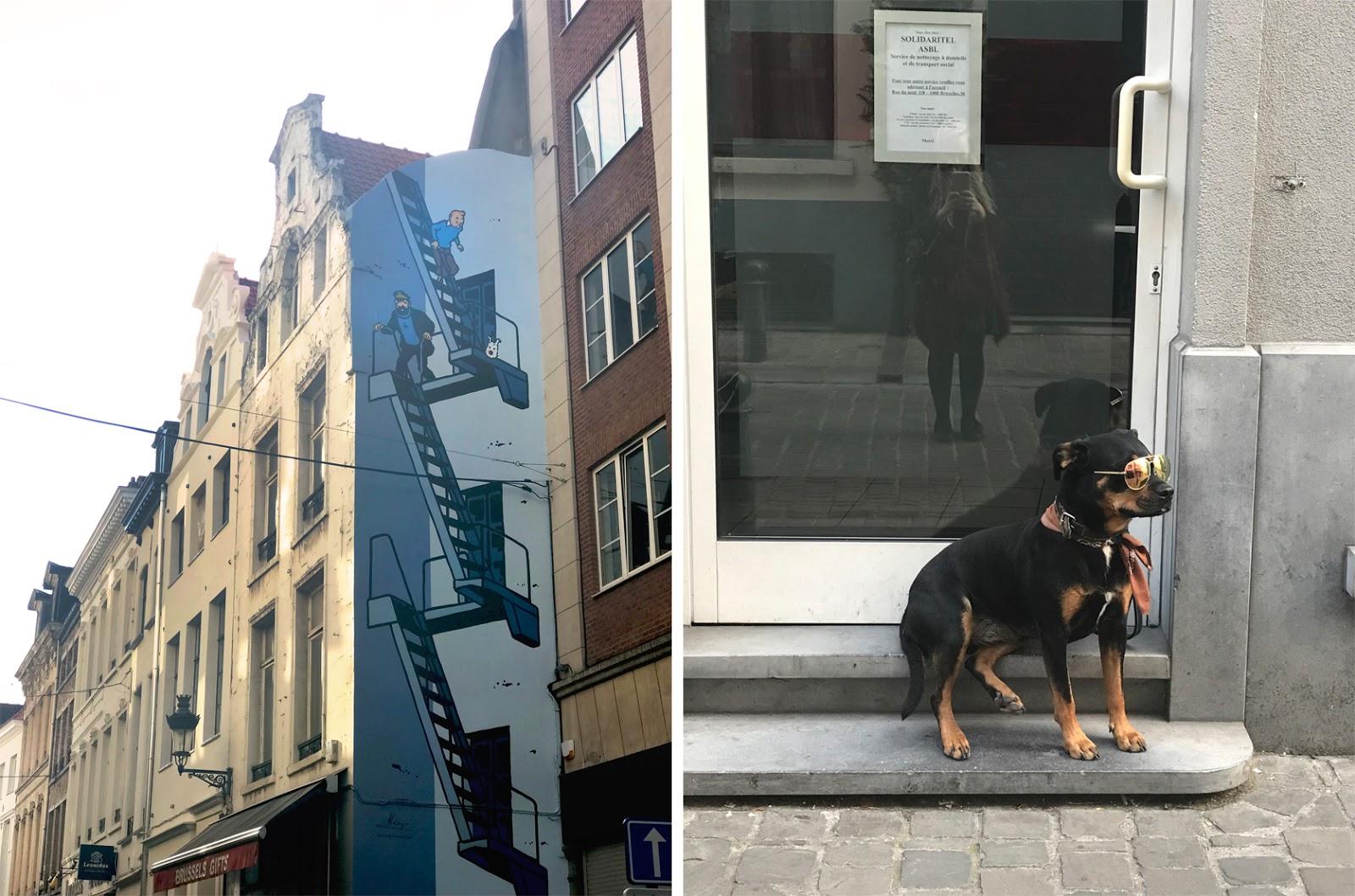 Street Art and Brussels Doggo