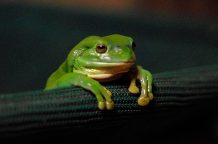 Huzuni the sad frog
