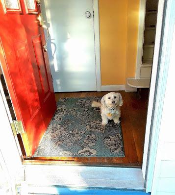 Dog Training Tips, dog training commands, Teach dogs the Wait Command, Dogs, Dog training, Dog Obedience training, dog safety