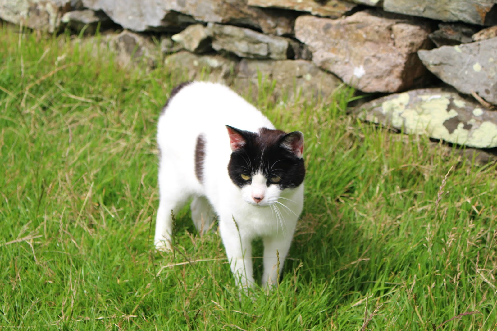 Isle Of Man Photo Diary manx cat
