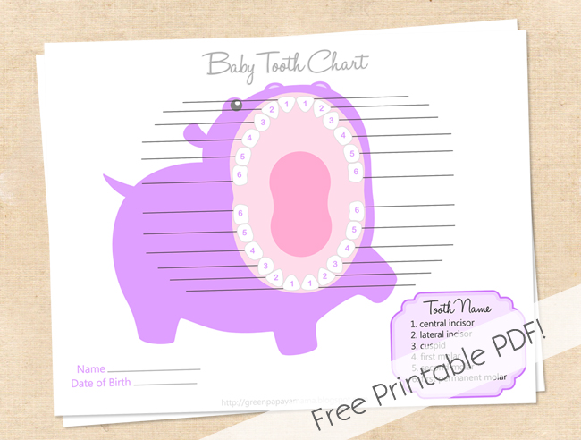 This is a picture of Baby Tooth Chart Printable within children's tooth