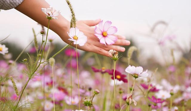 """""""Floresça todos os Dias.. Em Alegrias, em Pequenos Gestos, em Pensamentos Bons, em Amor."""