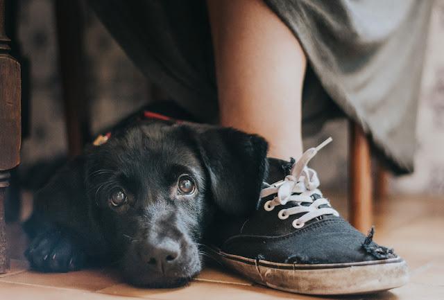 Fotografías-ganadoras-Dog-Photographer-2017