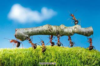 Cual es el significado de hormiga en la biblia