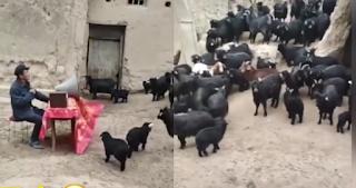 Κάλεσε σε συνέλευση τις κατσίκες του για να... αποφασίσουν για τα κέρδη του κοπαδιού (Video)