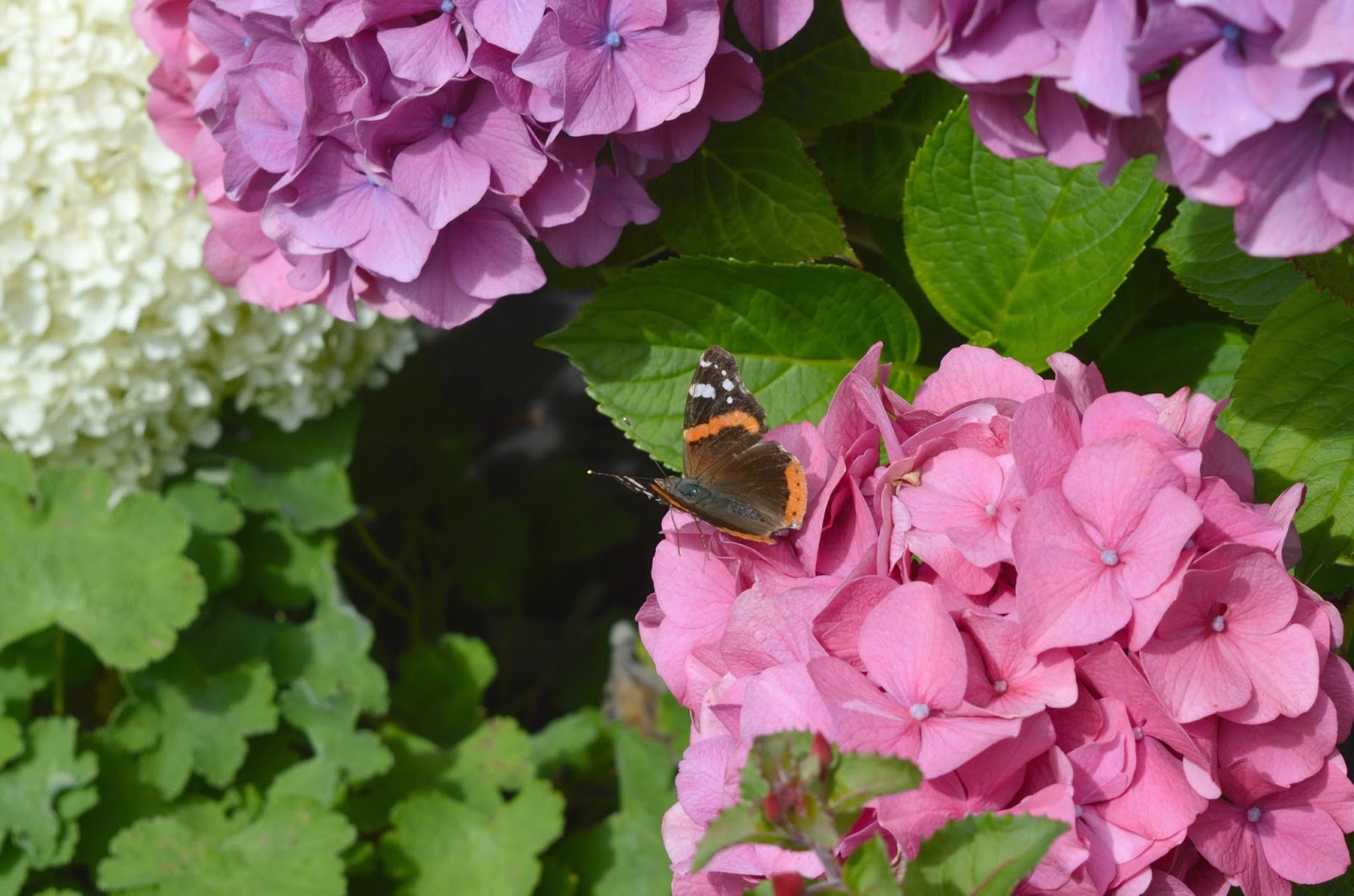 Gateshead's Great Outdoors - Birkheads Secret Gardens Bee and Butterfly Garden