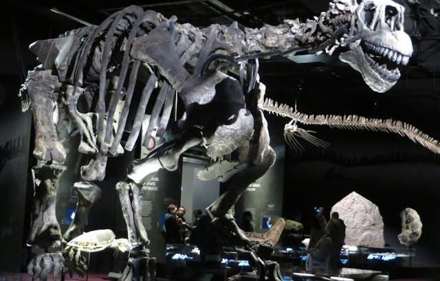Salle des dinosaures - Musée des Confluences