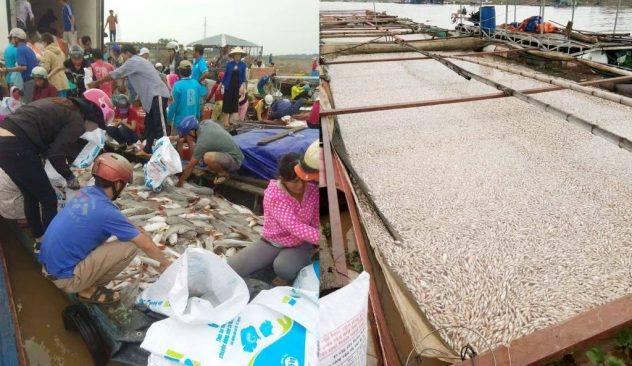 Không còn vốn đầu tư, bè cá của ngư dân bỏ hoang sau vụ cá chết