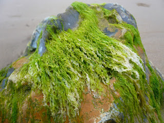 Lime green seaweed