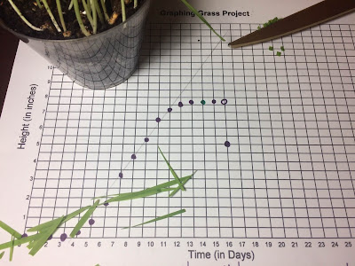 graphing grass linear equations algebra project day 16