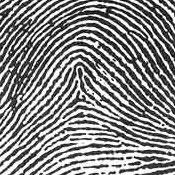 Tented Arch  sc 1 st  Fingerprint Technician Training & Fingerprint Technician Training: Types of Fingerprint Patterns