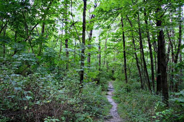 Rustic path through Apple River Canyon State Park. Image courtesy of A Little Time and a Keyboard.