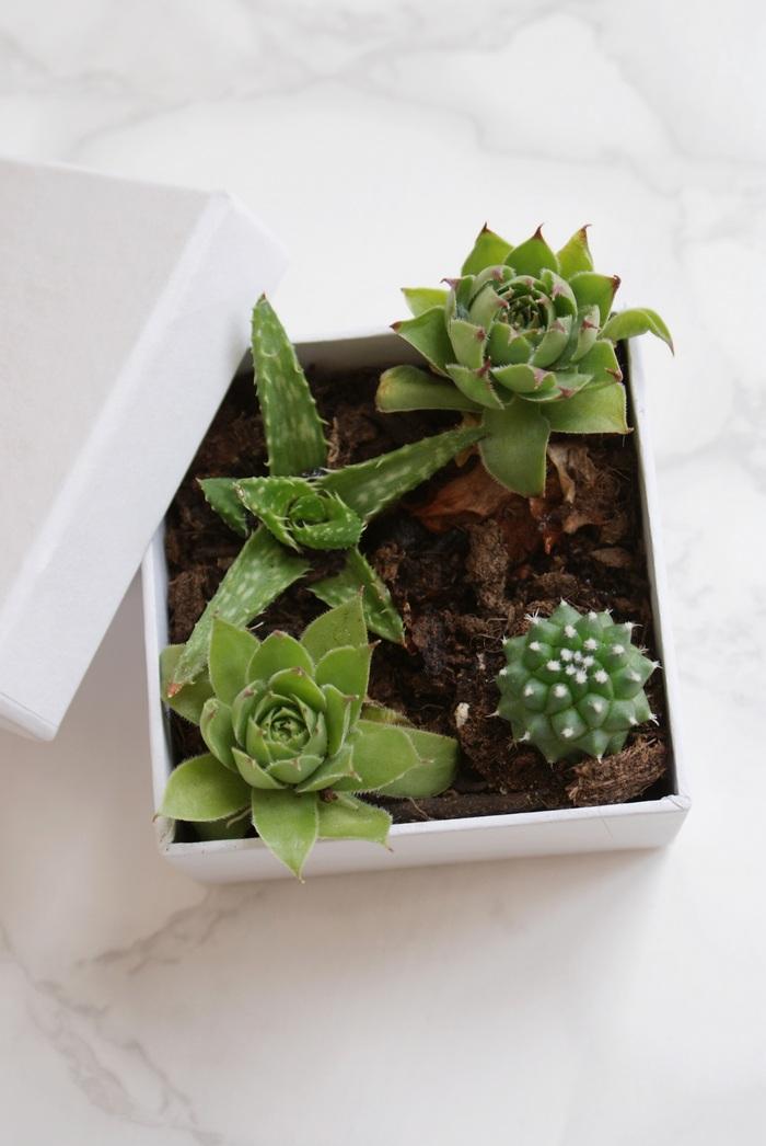 succulente piante grasse scatola faidate
