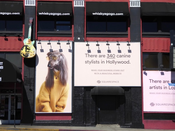 canine stylists SquareSpace billboard
