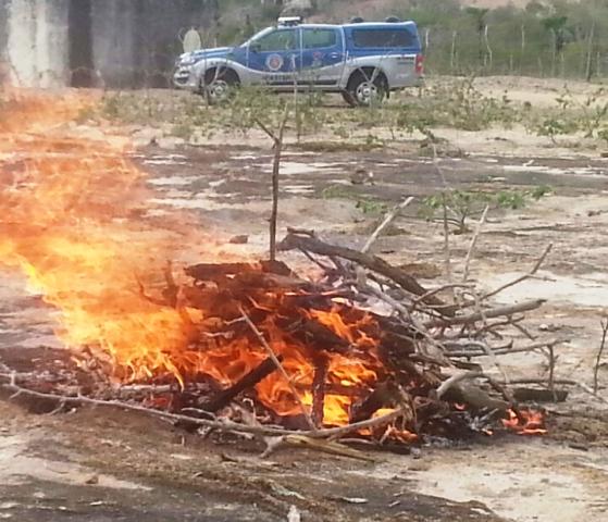 DT de Itatim incinera drogas apreendidas em operações