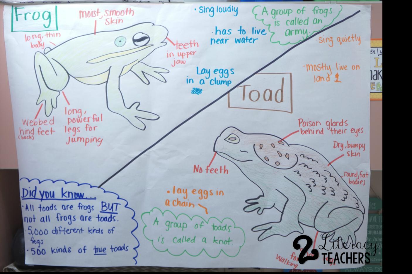 Frog And Toad Venn Diagram 2004 Chrysler Sebring Radio Wiring 2 Literacy Teachers Life Cycles The