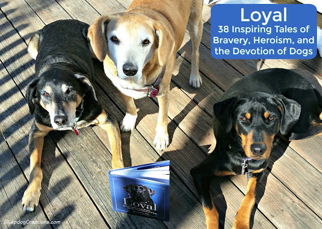 3 rescued dogs with Loyal book