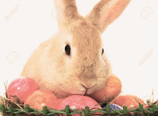 Easter Bunny Images