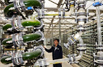 Algae for biofuel