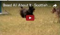 image Scottie Dog Video Screen Shot