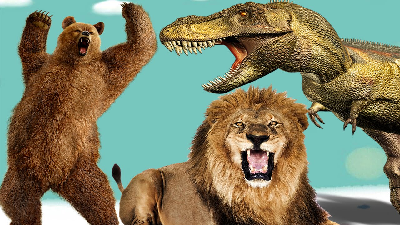 dinosaur vs lion real fight cartoons for children dinosaur lion