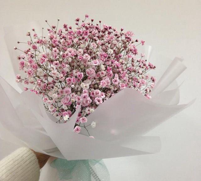 31 hình Hoa baby trắng, tím, xanh, hồng đẹp và ý nghĩa của nó