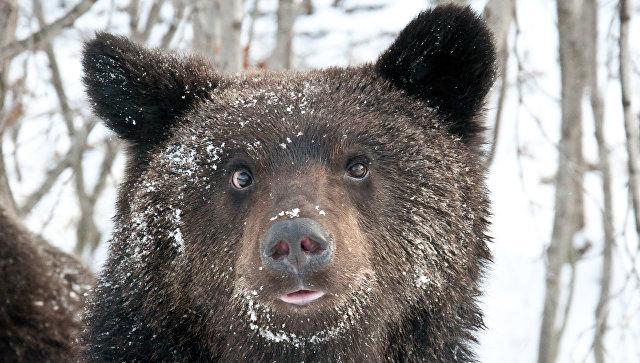На Сахалине проснулись медведи