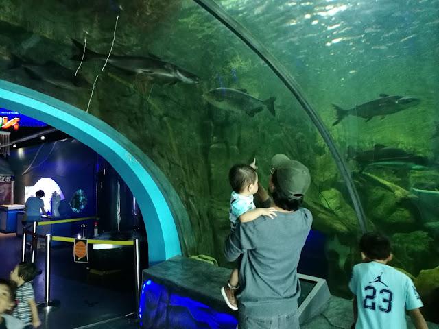 indoor gallery freshwater fish aquarium