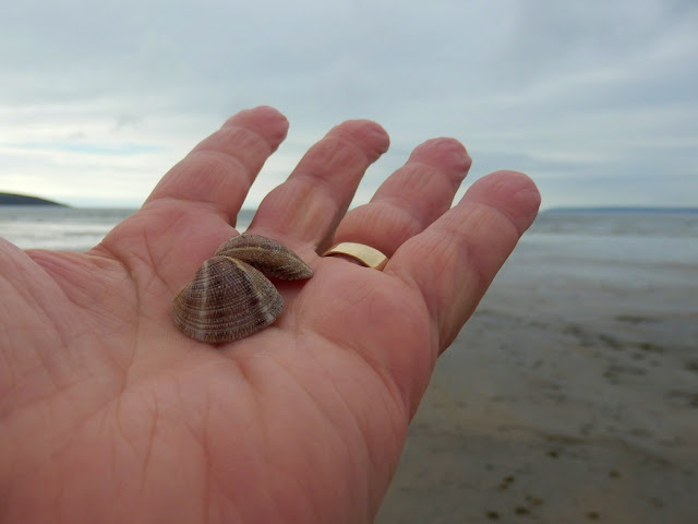 A sea shell found on Par Sands, Cornwall