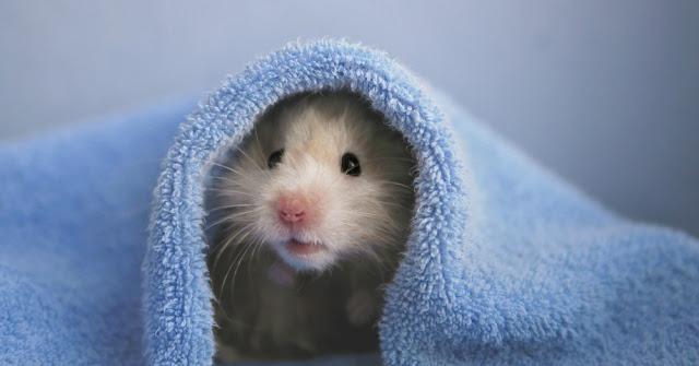 el dueño ideal para un roedor