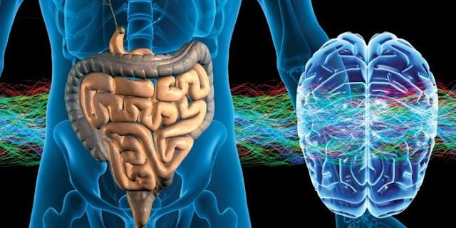 Resultat d'imatges de flora intestinal y cerebro