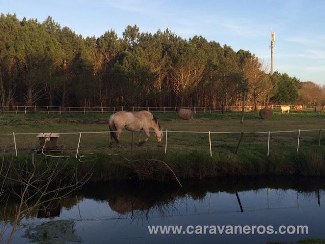 Foto de Picadero y caballos en el camping Le Vieux Port | Caravaneros.com