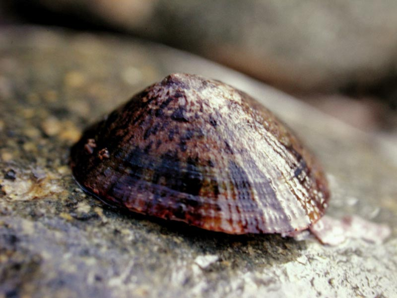 水草好朋友@部落格: 呼籲:請別再使用笠螺(壁蜑螺)作為清潔水族缸壁的工具生物