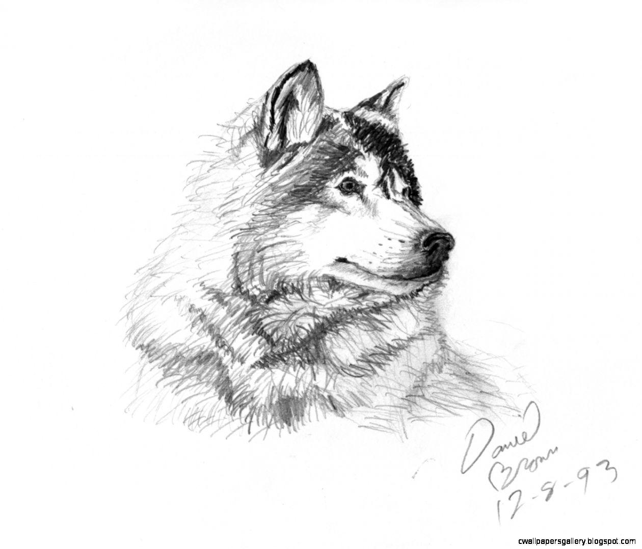 Easy Animal Drawings In Pencil