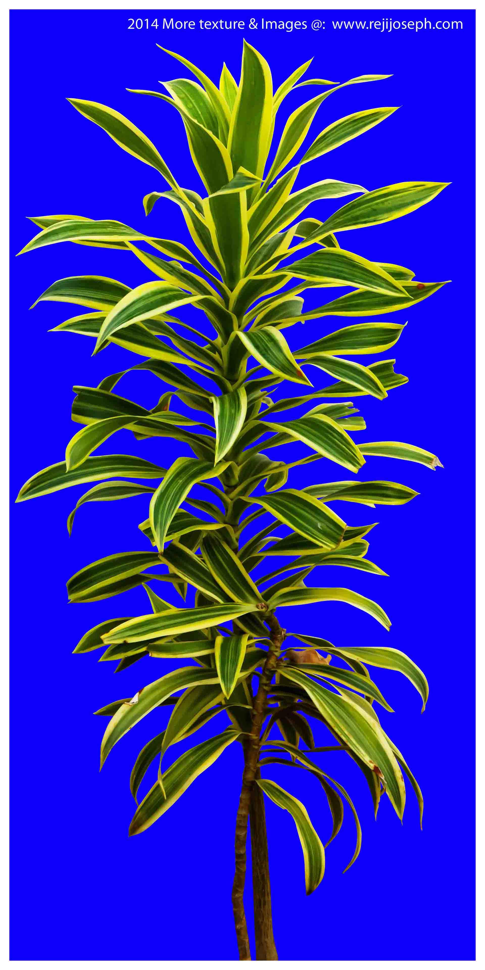 Garden plants texture 00019