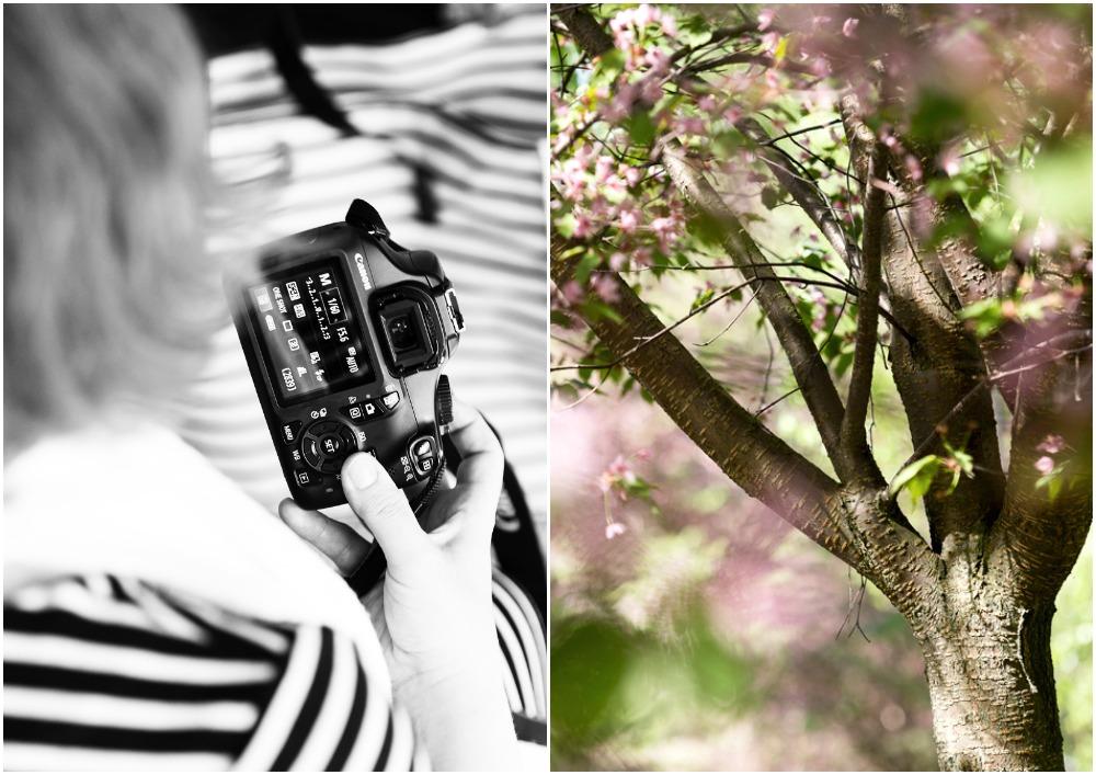 valokuvauskurssi, opetus, kurssi, valokuvauksen peruskurssi, Bedmil, Sipoo, Visualaddict, valokuvaaja, Frida Steiner, Visualaddictfrida, kevät, kirsikankukka, kirsikkapuu