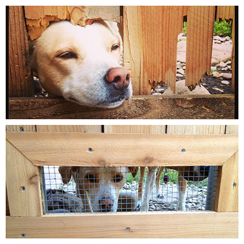 Diy Backyard Ideas For Dogs: The Happy Homebodies: March 2013